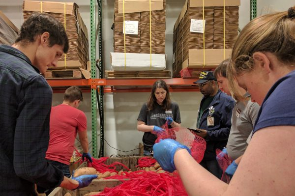 OIT staff sort sweet potatoes at the Food Bank of Central and Eastern North Carolina